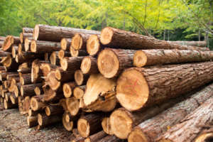 The Business of Forestry: How to Sell Timber